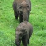 Wild elephants on the way to Top Station