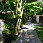 Beautiful tropical garden around the hotel.