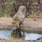 Photo de Naledi Bushcamp and Enkoveni Camp