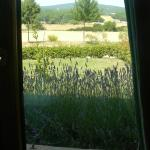 Foto de Bed and Breakfast Il Ceppo