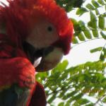 Macaw on hotel grounds