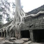 Mesmerising trees growing through the ancient Ta Prohm ruins