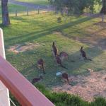 great wildlife outside our unit...