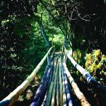 Bamboo Bridge to Jungle Hike & Mayfield Falls