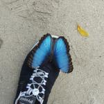 At butterfly farm