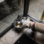 Kibble for the dogs at the from door.