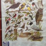 SOME OF THE BIRDS YOU MIGHT SEE-IF YOUR LUCKY