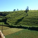 Φωτογραφία: The leisure village Nuwara Eliya