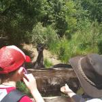 The emus get very, very close to you.  Watch your fingers.