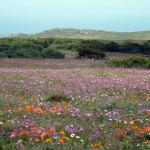 Wildflowers, as far as the eye can see