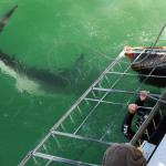 White Shark Projects Foto