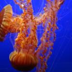 Photo of Monterey Bay Aquarium