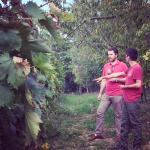 In the vineyard with Giacomo