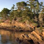 Whaler's Cove in late afternoon light