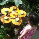 Granddaughter loved watching the butterflies feed on banana and oranges.