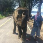 This elephant comes and plays at the next hotel along the beach and you can feed him bananas