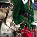 The Lion The Witch & Wardrobe Exhibition - Reindeer outside