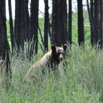 Wildlife is abundant in the park.  Deer, bears, elk, birds, insects, reptiles, and fish.