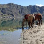 Mules drinking from Quilotoa Crater Lake