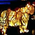 Lighted tiger.