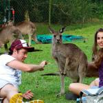Kangaroos love to be fed and are very friendly at this zoo