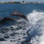 Two dolphins - Dolphin Racer