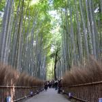 Bamboo Forest -FizzahR