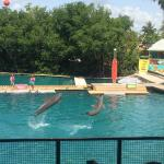 Photo of Miami Seaquarium
