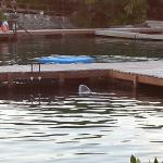 another sad dolphin