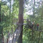 Photo of Capilano Suspension Bridge Park