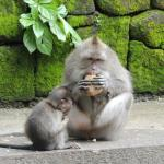 Monkeys with food at hand: Self-content