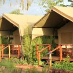 Wildebeest Eco Camp Foto