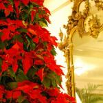 Poinsettia Christmas Tree in Lobby