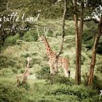 Giraffe center - less than 5 minutes from the hotel :) SWEET