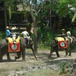 Photo de Bali Safari & Marine Park
