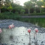 Flamingos on grounds