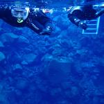 My partner and I snorkeling the tectonic plates