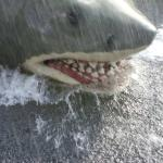 The shark from The Jews