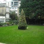 Christmas Tree in the garden
