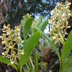 Beautiful orchids in the garden of Pequeno Paraiso