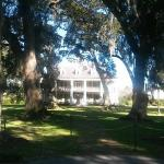 Houmas House through the oaks.