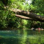 Amazing scenery and wildlife cave tubing with Ian Anderson's Caves Branch Belize