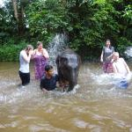 Washing the baby elephants in the river