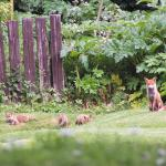 Mr Fox and Family