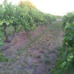 Strolling through the vines