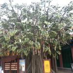 The wishing tree by the streetside