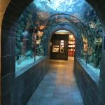 Fish tunnel in the aquarium