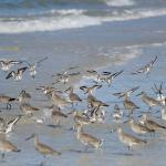 Large group of birds on the beach