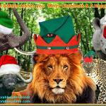 African Memorable Safaris wishes you a Merry Christmas and Happy New Year 2015. With thanks.