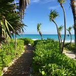 Path to the beach...so beautiful!
